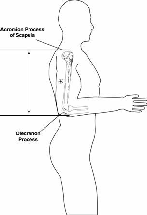 Participant position for upper arm length and midpoint